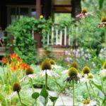 KHI GIÀ RỒI, Tôi Sẽ Tìm Một Mảnh Vườn Nhỏ, Trước Nhà Trồng Hoa, Sau Nhà Trồng Rau, Một Bữa Trà Một Bữa Cơm, Cùng Một Người San Sẻ